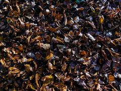 Otoño hojas (alexisromano22) Tags: landscape fall autumn leaves nature colorful background outside foliage serenity serene yellow orange green calm panasonic dmclz40 beautiful
