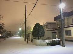 Blizzard to the West 2 (sjrankin) Tags: 8december2019 edited kitahiroshima hokkaido japan snow weather evening lights lines wires road blizzard wind trees houses neighborhood