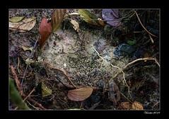 Footprint (VERODAR) Tags: footprint jungle junglefloor mud muddy forest rainforest nature natureandwildlife nikon verodar veronicasridar