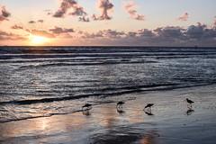Winter sunset (EMcIsaac) Tags: huntington california beach sunset sun clouds winter sand reflection birds dinner sands