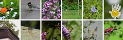 Bsucher-Fotos 001 (bratispixl) Tags: indexe animal approaching blossom visitor bratispixl butterfly bird flower