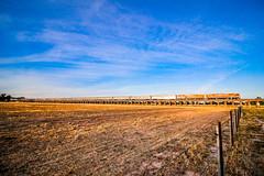 Great Southern, Great Viaduct #3 (southernspiritnr84) Tags: passenger nsw sunrise greatsouthern bridge jbr journeybeyondrail train barbwire waggawagga railway viaduct pacificnational pn fence australia