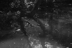 Duck (Typ250) Tags: 東京都 日本 leicam leica leicammonochrom monochrome mmonochrom summarex summarex85cm summarex85mm summarexf85cm115