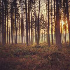 Morgenwald (picturesbywalther) Tags: fog nebel natur forest wald morgen