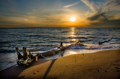 Beached (Neil Cornwall) Tags: 2019 canada lakeerie october ontario pointpelee fall sunset
