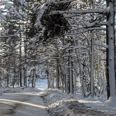 Snowy forest (yooperann) Tags: snowcovered trees woods forest nature road sunny day marquette upper peninsula michigan