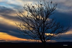 Arbre .... (Jehanmi) Tags: travel landscapelover landscape paysage nikond7200 treespics photography naturephotography nikon coucherdesoleil sunrise sunset nature trees