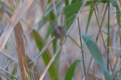 T3SB8904 (jojotaikoyaro) Tags: zenpukuji suginami tokyo japan fujifilm bird animal nature wildlife xt3 xf100400mm
