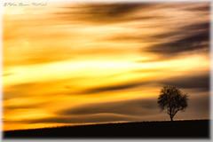 """Memories"" (Peter Daum 69) Tags: sonnenuntergang sunset scenery licht light lightwork art artwork natur nature natura farbe color landscape landschaft dream traum magic magie sonnenaufgang sunrise stunningnature baum tree moods stimmung canon eos"