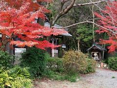 Late fall colors at Shogenin (松源院) (Greg Peterson in Japan) Tags: plants ritto 滋賀県 植物 japan shiga foliage 紅葉 栗東市 takano temples shigaprefecture