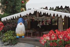 The Repair Shop (lamwaileong) Tags: finland flowerdome gardensbythebay lapland poinsettiawishes rovaniemi sg santa santaclausvillage singapore therepairshop
