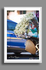 Daisy flowers at Hanois street. (Vinh.NT photos) Tags: babyspet bairnwort daisy flower conical hat vietnamese street moment winter hanoi