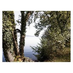 Birrwil, Hallwilersee (Daniel Philipona) Tags: birrwil hallwilersee aargau pixel 3a raw