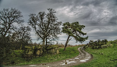 Haverah Park (Sleepy Hedgehog) Tags: trees rocks road track grass sky clouds haverahpark beckwithshaw harrogate northyorkshire yorkshire england photo photograph light shadow contrast tonemapping highdynamicrange hdr postprocessed raw panasonicrawfile rw2 rawtherapee luminancehdr linux opensourcesoftware ubuntu1910 photography amateurphotography lumixg microfourthirds micro43 mirrorless lumix gf7 camera winter december 2019 sleepyhedgehog ©paulmarshall