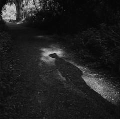 Stef, Grantchester (RoryO'Bryen) Tags: stefconner roryobryen copyrightroryobryen rolleiflex28d film analoguephotography noiretblanc blancoynegro kodaktrix