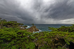 Cypress Canopy (Doug Santo) Tags: lonecypress cypress 17miledrive pacificgrove seascape storm landscapephotography