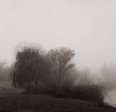 and the hour after that (emmairisbenson) Tags: trees lake mist landscape world time