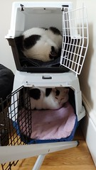 Cat cube hotel (craigjam) Tags: 2019 london england home cats