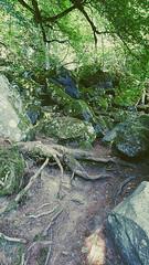 IMG_20190720_135320409-2 (schoolartBYschoolboy) Tags: auvergne puydedome lake forest vulcan