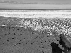 (Fleet.) Tags: coast westcoast beach stones sea tasman dog shadow