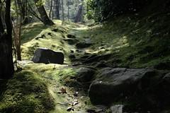 garden (ababhastopographer) Tags: kyoto arashiyama tenryuji autumn afternoon moss stones fallenleaves 京都 天龍寺 嵐山 秋 午後 庭園 苔 落葉 石 昼下がり