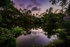 India - Kerala - Mariarikulam - 2500 (Peter Goll thx for +13.000.000 views) Tags: mararibeach spiegellos indien landscape landschaft kerala nature reflection z6 nikonz nikonz6 mirrorless natur speigelung cherthala mariarikulam india nikkor1430mm
