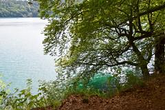 sBs_1907(vac2)_0023-2 (schoolartBYschoolboy) Tags: auvergne puydedome lake forest vulcan