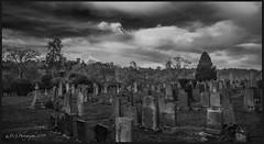 Ayton Grave Yard DSC_4278 (dark-dave) Tags: graveyard ayton scotland scottishborders rip aytoncastle sky trees headstones
