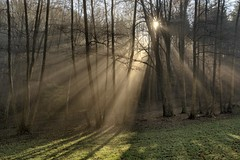 *Beams of light in the winter forest* (Albert Wirtz @ Landscape and Nature Photography) Tags: albertwirtz nebel mist fog forest wald tree baum nature natur natura naturaleza moseltal mosel moselle mosellevalley dreisbachtal beam sonnenstrahlen sun sunbeams light licht lichtung forestclearing kesten minheim brauneberg bruma brume brouillard nebbia laniebla neblig misty foggy fineart naturefineart landscape landschaft paesaggio paysage paisaje campo campagne campagna nikon d810 fineartphotography mood stimmung dreismühle dreisbach germany deutschland allemagne rheinlandpfalz rhinelandpalatinate bernkastelwittlich eifel moseleifel