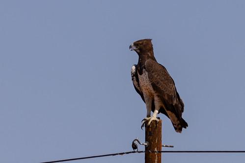 Eagles fan photo