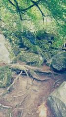 IMG_20190720_135318718-2 (schoolartBYschoolboy) Tags: auvergne puydedome lake forest vulcan
