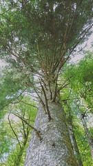 IMG_20190720_135327182-2 (schoolartBYschoolboy) Tags: auvergne puydedome lake forest vulcan tree