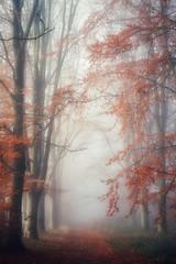 Light and fog (juliendumont2) Tags: tree treetrunk forest fog woods woodland landscape outdoors nopeople nature beautyinnature naturephotography mothernature sun light autumn season amomentintime inexplore greenscene orange leaf morning serenity path canon belgium fineart