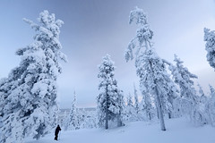 Romaniemi - Finland (Frédéric Lefebvre - Landscape photography) Tags: lapland snow tranquil scene winter tree landscape nature cold temperature outdoors scenics white color environment frozen rovaniemi