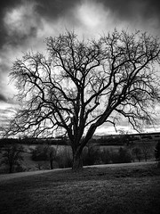 Just a tree (Deepmike70) Tags: landscape blackandwhite bw tree branch sun clouds hill gras