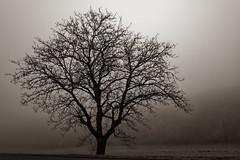 Buxière enbrumé (Glc PHOTOs) Tags: france aube buxièressurarce nikon full frame fx d850 glcphotos 45mpixel 20191205145048glc5833nikond85024mmdxo fog landscape sp di g2 paysage tamron vc f28 usd brume 2470mm a032 brouillage tamronsp2470mmf28divcusdg2 haze