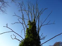Seaton Park, Aberdeen (iainh124a) Tags: iainh124a scotland aberdeen uk sony sonycybershot dschx95 dschs95 cybershot dx95