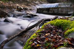 Escorrentía (Jose_Benito) Tags: agua verde otoño invierno frio calor hojas largaexposición fltros luz orton