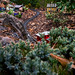 Garden caboose