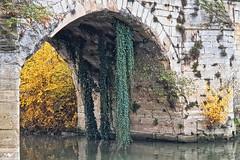 le lierre - Poissy HDR+DxOFP 20191205 (mich53 - thank you for your comments and 7M view) Tags: architecture arche bridge 4autumn saisons automne samsunggalaxynote8 poissy îledefrance