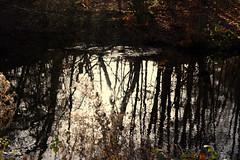 Basingstoke Canal Claycart-Eelmoor 8 December 2019 002 (paul_appleyard) Tags: basingstoke canal farnborough aldershot hampshire hants december 2019