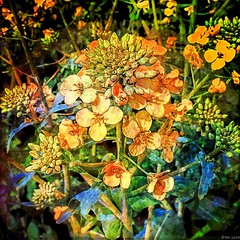 Blossoms (b_kohnert) Tags: blossoms flowers plants nature colors abstrakt art painting digitalpainting digitalart