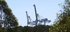 Typical Fremantle Skyline (Padmacara) Tags: australia fremantle d7100 tamron28300 crane tree
