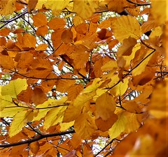 Autumnal Colours (penelopephotoshop) Tags: alexandrapark manchester uk england trees leaves autumnalcolours nature naturalbeauty park parkland urbanenvironment urbanlandscape urban
