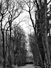 Bleak Midwinter (penelopephotoshop) Tags: alexandrapark manchester uk blackwhite photography trees nature park parkland walkway path england winter urban urbanenvironment urbanlandscape deciduous