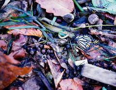Life and Death (B. Gohacki) Tags: yashinon f2 vintagelens dslr ricoh pentax k1 m42 vintage glass lens auto 5cm