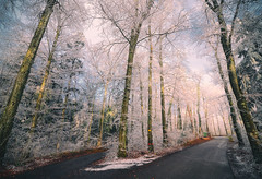 Winter afternoon (ceca67) Tags: winter nature frost road countryside forest wald curve cold cool switzerland svetlanapericphotography
