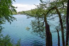 sBs_1907(vac2)_0052-2 (schoolartBYschoolboy) Tags: auvergne puydedome lake forest vulcan tree