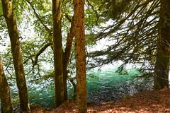 sBs_1907(vac2)_0046-2 (schoolartBYschoolboy) Tags: auvergne puydedome lake forest vulcan