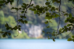 sBs_1907(vac2)_0037-2 (schoolartBYschoolboy) Tags: auvergne puydedome lake forest vulcan